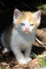 :-) (modestino68) Tags: cat gatto cucciolo augustodaolio
