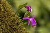 Flowers (The Original Happy Snapper) Tags: portrait orchid flower green nature moss outdoor awesomeblossoms
