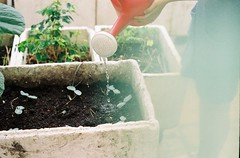 blem (You wont An) Tags: film 35mm garden dusk ishootfilm delight analogue hanoi filmphotography filmisnotdead lightsleak