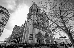 Notre Dame de Paris (julesnene) Tags: bw paris france monochrome europe ledefrance cathedral fr notredamedeparis julesnene juliasumangil canon7dmarkii canon7dmark2