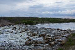 IMG_1720 (vmozolev) Tags: forest river wolf ukraine samara dnepropetrovsk
