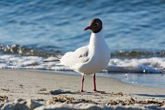 TH20160505A608343 (fotografie-heinrich) Tags: strand mwe ostsee zingst stdteortschaften