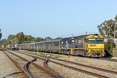 3AS8 NR21 8256 Dudley Pk 240516-1 (Tom Marschall) Tags: train pacific indian south australia adelaide passenger sa aus nr 82 ip 8256 nr21 3as8