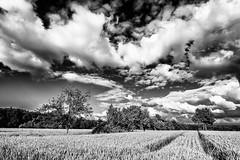 Will there be Summer... (Ody on the mount) Tags: bw monochrome de deutschland pflanzen felder himmel wolken sw bume tbingen badenwrttemberg schwbischealb fototour anlsse