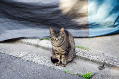 Today's Cat@2016-06-08 (masatsu) Tags: cat pentax catspotting mx1 thebiggestgroupwithonlycats
