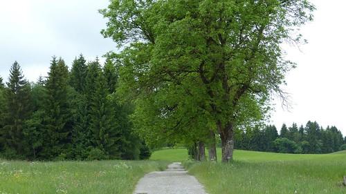 Weg bei Eschach