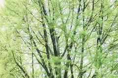 # (David C W Wang) Tags: tree green day korea seoul  gyeongbokgung          sel2470z sonya7ii