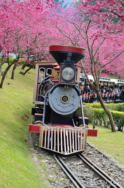 九族文化村櫻花祭-日01.jpg