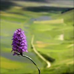 si avvicina la primavera (s@brina) Tags: italy flower color verde green primavera spring sentiero colori viottolo bestcapturesaoi elitegalleryaoi