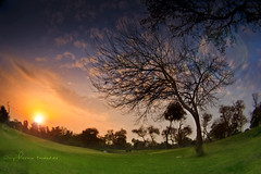 spring set (Chickenology) Tags: sunset golf landscape spring lahore royalpalm pharantanveer golfpakistan