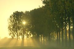 Sun (Harry Mijland) Tags: autumn trees sun mist holland fall fog bomen herfst nederland maarssen oudzuilen dearharry harrymijland