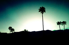 """A Palm Springs evening"""
