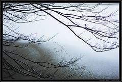 NEX-7 with Leica Summilux 35/1.4 (Dierk Topp) Tags: trees 35mm eis herrenteich leicasummilux3514 nex7
