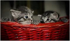 ♥❤♥ Kittens ♥❤♥