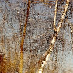 Bouleaux du printemps...!!! (Denis Collette...!!!) Tags: canada reflection tree river spring poetry rivière reflet québec arbre printemps bouleau poésie portneuf wildriver deniscollette pontrouge rivièreauxpommes