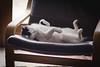 42/365 (Eva's Journal) Tags: pets cat photography feline nap sleep kitty 85mm impressedbeauty
