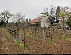 Spring Street Vineyards (Mike Bowermaster Photography) Tags: california usa tower northerncalifornia barn rural vineyard vines rust earth country perspective row winery soil till sanfranciscobayarea napavalley vernacular sfbayarea westcoast sthelena springstreet architecturalphotography mikebowermasterphotography canons95 springstreetvineyards