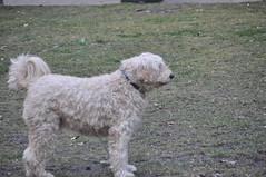 DSC_7830 (sparcly) Tags: people philadelphia dogs rouge football centercity rittenhouse devon philly rittenhousesquare parc phila rittenhousesq