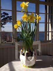 Happy easter (Christoffer Boman) Tags: flowers blue light sea sky sun house holiday water beautiful colours stockholm atmosphere photographic hq archipelago skärgård runmarö gatan