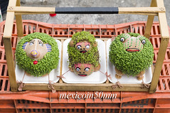 "Mexican Chia pet heads • <a style=""font-size:0.8em;"" href=""https://www.flickr.com/photos/7515640@N06/6931460369/"" target=""_blank"">View on Flickr</a>"