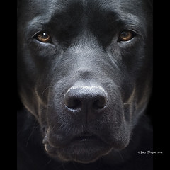 Intensity (dog ma) Tags: light shadow dog black nature up ma photography 50mm nikon lab close natural jody sonny nikko