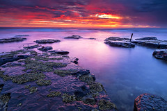 Today I Woke Up On The Moon (stevoarnold) Tags: ocean pink sea sky color water clouds sunrise australia nsw southcoast illawarra littleaustinmer