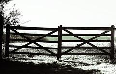 Don't fence my horizon (Tinina67) Tags: portrait bw pet france flower macro animal sepia fence spring close farm horizon border shed sigma daisy tina sw rooster 105 limit challenge bauernhof odc chook gers seissan tinina67
