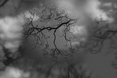 Tu amor ... (mariannadivaga) Tags: tree méxico mexico holga árbol ciudaddeméxico digitalholga canonholgalens holgalensforcanon