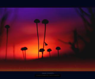 - piccoli tramonti -