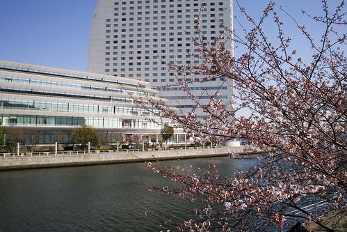 桜とパシフィコ横浜