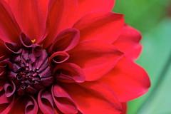 Perfect design (Deb Jones1) Tags: flowers red flower nature beauty canon garden botanical outdoors flora blooms flickrawards debjones1