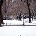 Central Park in Winter I