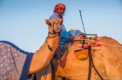 Deserts and Camels 131107 17_22_18 (Renzo Ottaviano) Tags: race al dubai desert united racing course emirates camel arab lorenzo races camels corrida emirate deserts uniti renzo unis arabi carrera corsa emirati unidos camellos chameaux rabes kamelrennen   arabes ottaviano camelos emiratos emirados vereinigte arabische cammelli emiratiarabiuniti mirats     marmoun