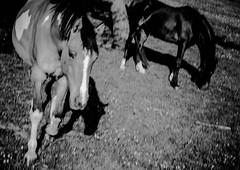ND7_1925.jpg (budbrain) Tags: summer horse canon landscapes mhle nikon mark sommer natur blumen ii josef gras landschaft pferde wald pferd wandern koblenz weg buchholz hunsrck forsthaus ehrbachklamm remstecken windhausen oppenhausen d7000 ehrbach sejrek budbrainde