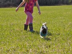2014.04.19-15.45.40 (Pak T) Tags: dog kat pug bennett zuikodigital olympus1260mm