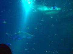 Stralsund: Ozeanum (gernotp) Tags: deutschland tiere sommer urlaub natur ostsee stralsund ort fische mecklenburgvorpommern ostseeurlaub rgenurlaub wirbeltiere chordatiere grv4al grl5al