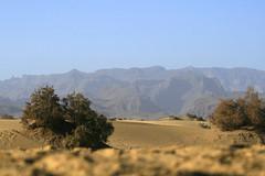 Dunas y cumbre en Maspalomas Gran Canaria