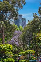Torre Bancomer desde chapultepec 104 (L Urquiza) Tags: park city parque mexico torre ciudad bosque chapultepec bancomer