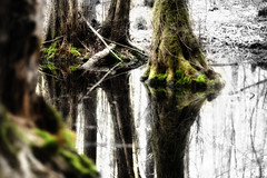 Moormoos (Rainer Schund) Tags: tree nature water forest landscape see nikon wasser natur forgotten moor landschaft wald bume baum moos nikond700 naturemasterclass natureexploring moormoos