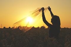 (CarolienCadoni..) Tags: sunset sun netherlands silhouette sundown sony nederland groningen rapeseed terapel rapeseedfields sonydslr580