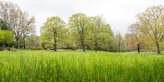 20160508 (Homemade) Tags: trees ny newyork green spring westchestercounty lewisboro waccabuc nikkor2470mmf28 nikon2470mmf28