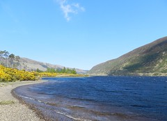 Loch Dughaill, Near Balnacra, Wester Ross, May 2016 (allanmaciver) Tags: blue sky water yellow allan ross highlands scenery soft colours with stones pastel low great an her take another loch done curve viewpoint broom nicely gorse wester dughaill allanmaciver