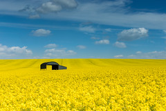 Barn (Jonny_Royale) Tags: england colour beautiful field yellow clouds contrast canon landscape spring telephoto dorset bloom minimalistic isolated rapeseed leegradfilters
