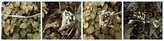 Metamorphose (Linda Broszeit) Tags: flower green fleur natur blumen grn garten metamorphosis metamorphose verwandlung