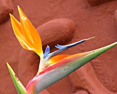Terracotta Bird! ('cosmicgirl1960' NEW CANON CAMERA) Tags: travel blue brown holiday spain terracotta espana manmade costadelsol andalusia puertobanus marbella yabbadabbadoo