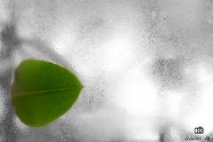 Hoja en la ventana (Bochito007) Tags: naturaleza cold color verde green hoja window nature water rain ventana leaf lluvia agua nikon frio selective selectivo d5200