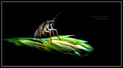 Bug on Black (J Michael Hamon) Tags: camera black macro nature blackbackground bug insect lens nikon outdoor micro 40mm nikkor assassinbug assassin hamon d3200 photoborder