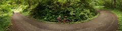 Nice gravel descent (Franklyn W) Tags: oregon portland pdx forestpark bikeriding nwportland touringbike randonneuse twitter specializedsequoia mixedterrain 650bconversion tumblr saltzmanroad rackbyjimg