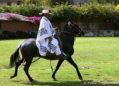 Peruvian Paso Horse (lugi_ch) Tags: travel people peru inca cuzco cusco sacredvalley urubamba nationalgeographic quechua solyluna lindbladexpeditions urubambavalley wayraranch