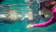 Baja California Sur, Mar de Cortez-22.jpg (gaillard.galopere) Tags: beautiful mexico underwater experience bajacalifornia baja bajacaliforniasur lapaz phoque plonge otarie lobosmarinos sousmarin aquatique subaquatique snorckeling snorckel gaillardgalopere mexcapade